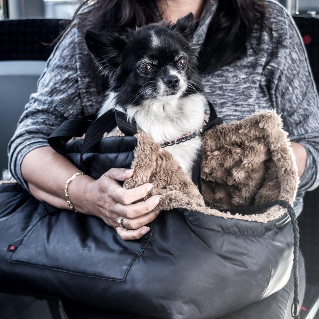 Hunde im Engadin Bus